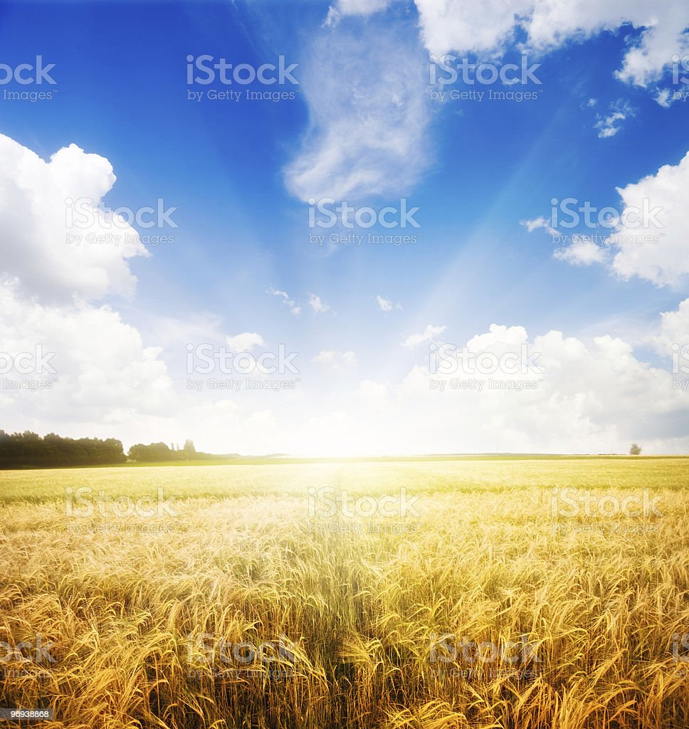 Landscape of farmland on a beautiful morning royalty-free stock photo