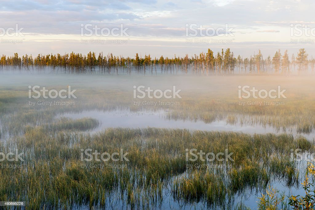 landscape of fog at sunrise on the swamp in Siberia stock photo
