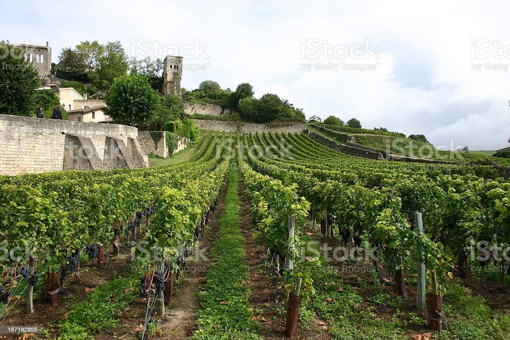 Paisagem de vinha Francesa - fotografia de stock