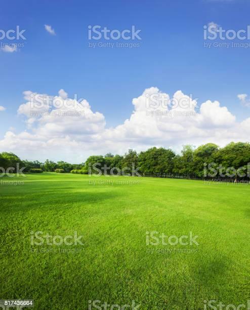Landscape of grass field and green environment public park use as picture id817436664?b=1&k=6&m=817436664&s=612x612&h=coya3xav4wueev3tq5mqamupu6osohslw5p f4jumvy=