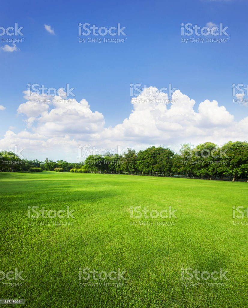 landscape of grass field and green environment public park use as natural background,backdrop stock photo
