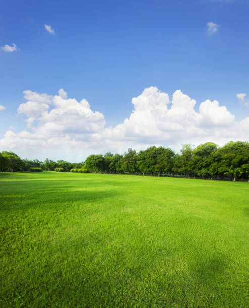 landscape of grass field and green environment public park use as natural background,backdrop - public park stock photos and pictures