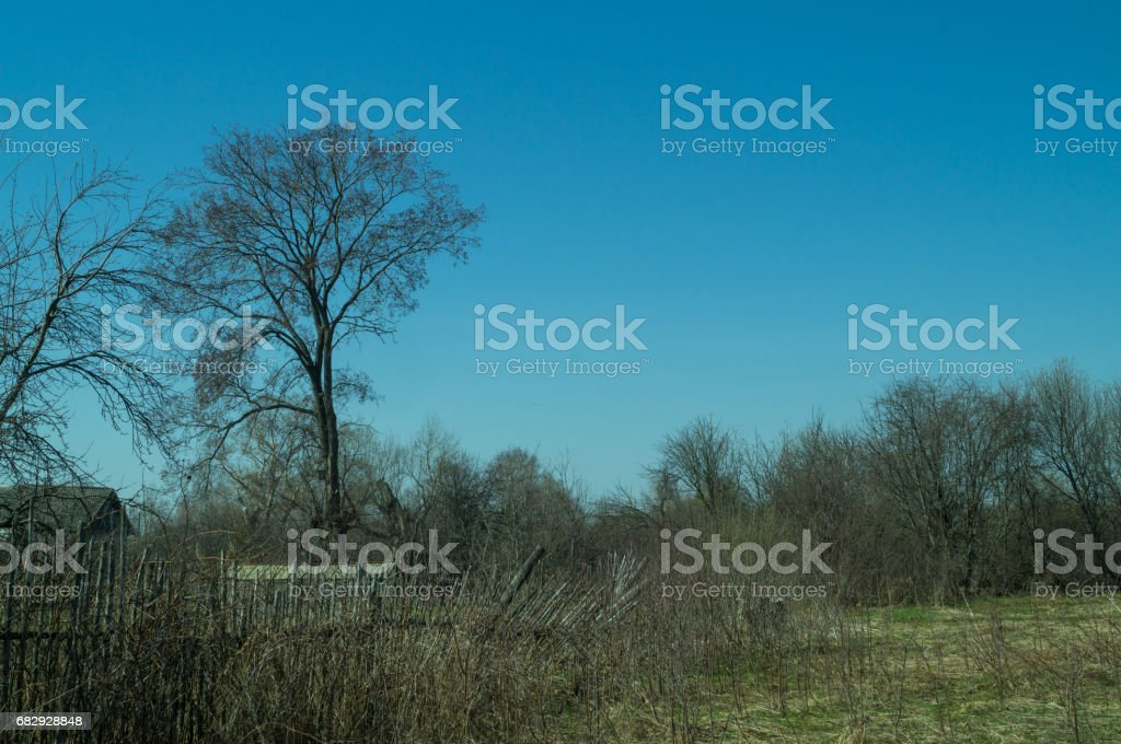 landscape of grass field and green tree royalty-free stock photo