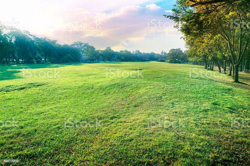 landscape of green environment park stock photo