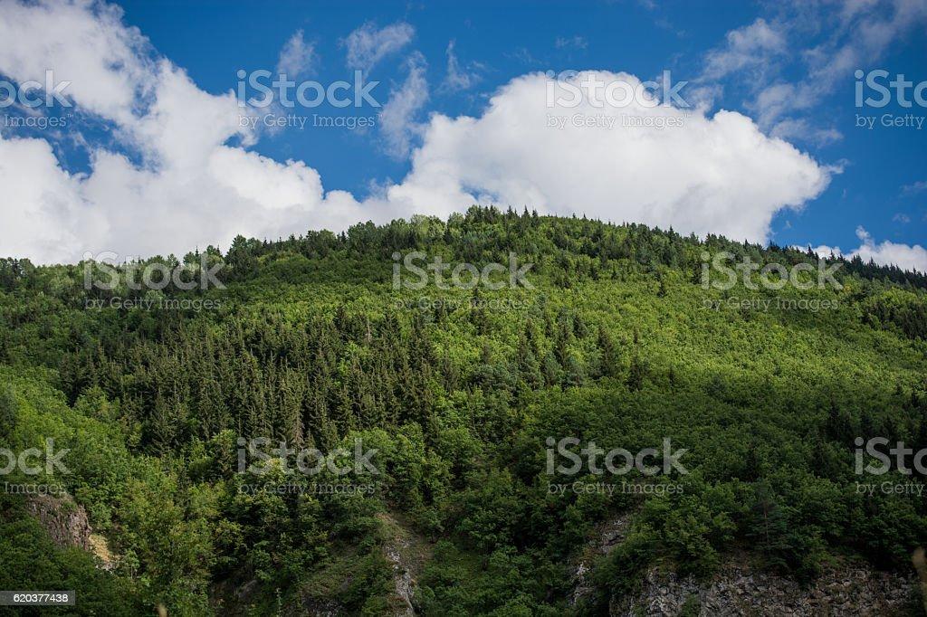 Landscape of  highland forest zbiór zdjęć royalty-free