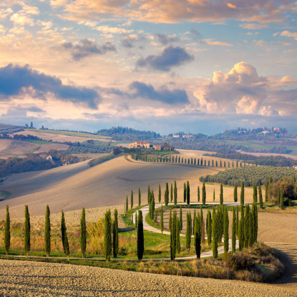 landscape of hills, country road, cypresses trees and rural houses Beautiful landscape of hills, country road, cypresses trees and rural houses - Tuscany nature, Italy, Europe pienza stock pictures, royalty-free photos & images