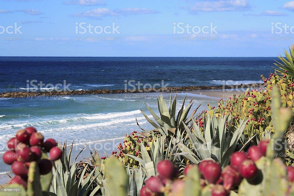 Paysage d'Israël photo libre de droits