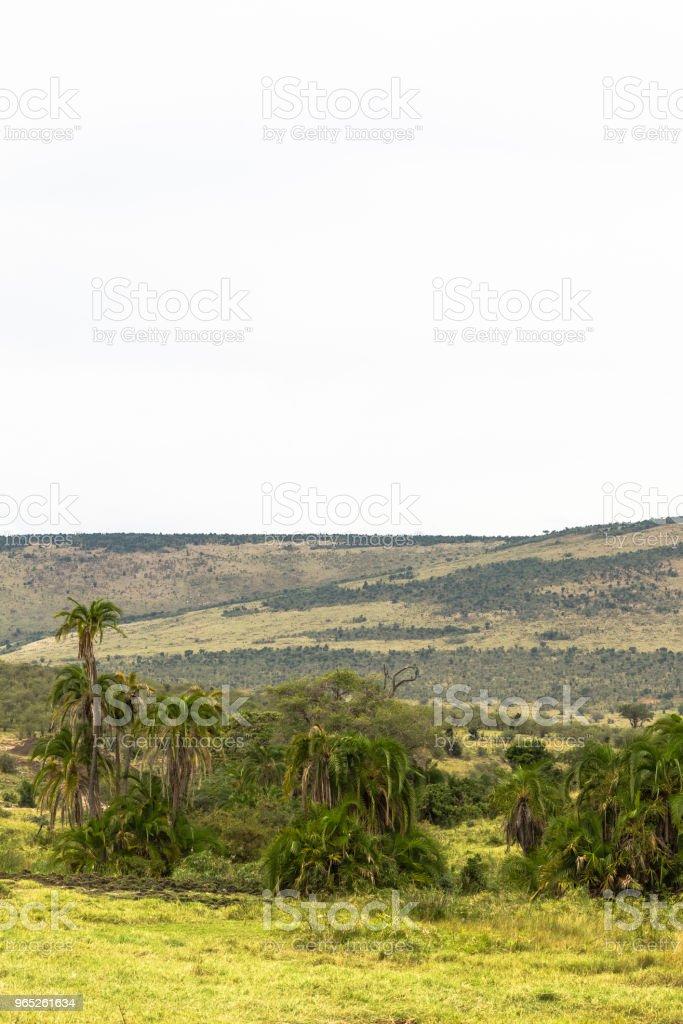 Landscape of Kenya. Savannah can be and such. Masai Mara, Kenya royalty-free stock photo