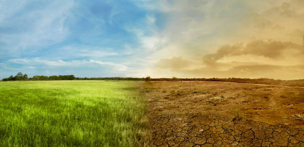 Landscape of meadow field with the changing environment stock photo