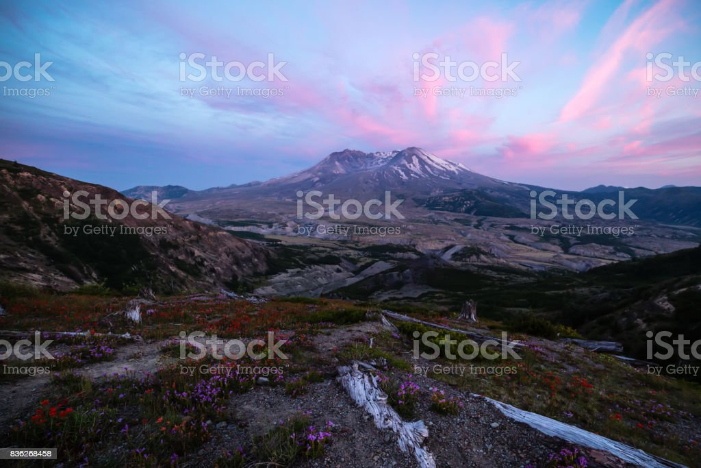 Landscape of Mount Saint Helens Sunset with Wildflowers stock photo