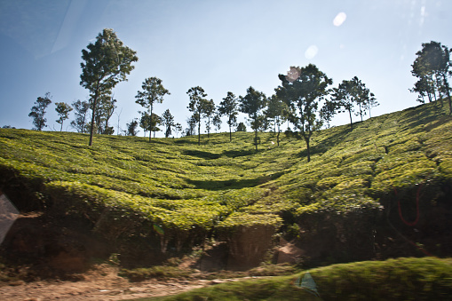 Landscape Of Munnar Kerala Stock Photo - Download Image Now