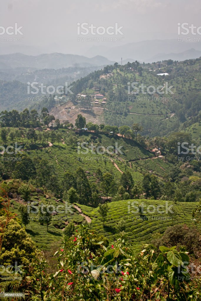 Landscape of Munnar Kerala - Royalty-free Color Image Stock Photo