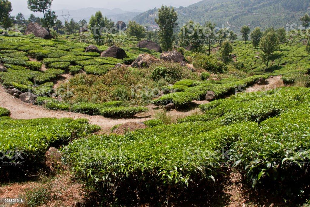 Landscape of Munnar Kerala - Royalty-free Color Image Stock Photo