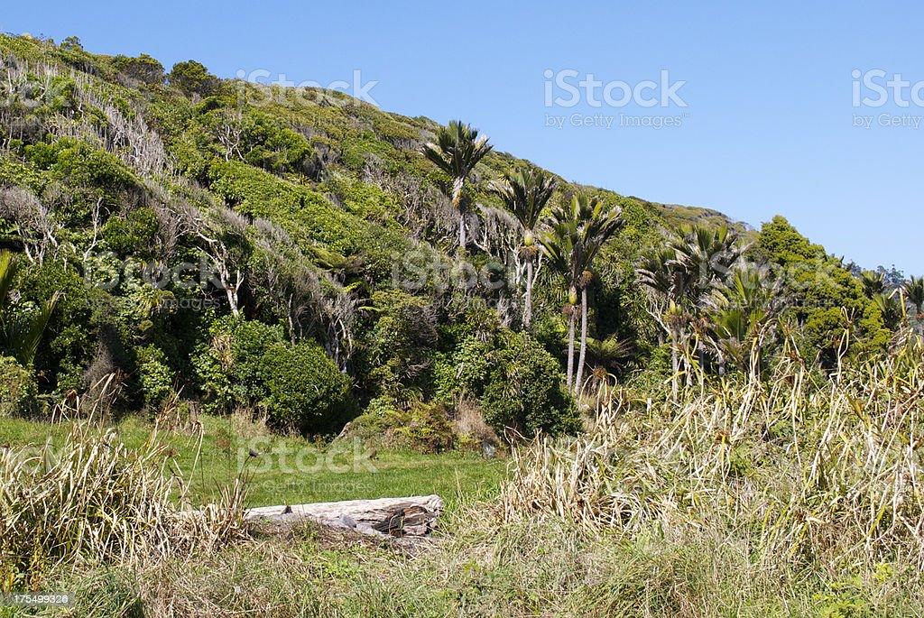 Landscape of Nikau and windswept Manuka, NZ stock photo