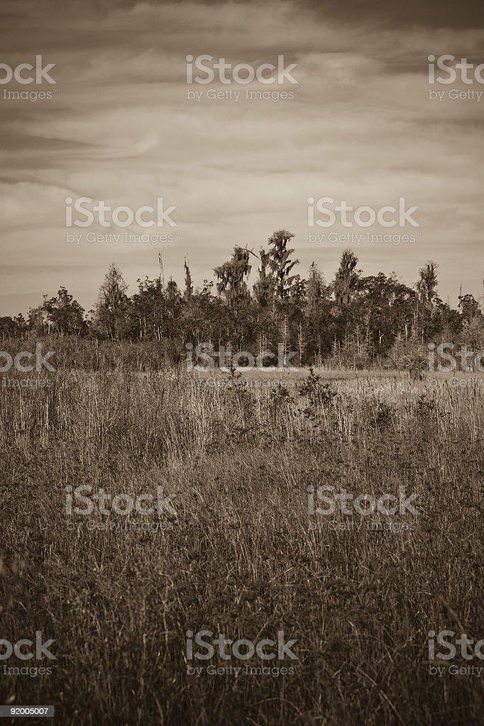 landscape of Okefenoke wildlife refuge stock photo