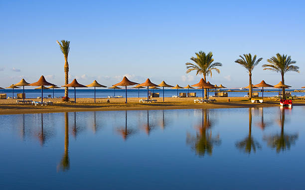 Landscape of palms and umbrellas along egyptian shoreline picture id177375008?b=1&k=6&m=177375008&s=612x612&w=0&h=ybpwfvj0letfbfir9hzyjm nkxqx2cmikzbnx0ywovi=