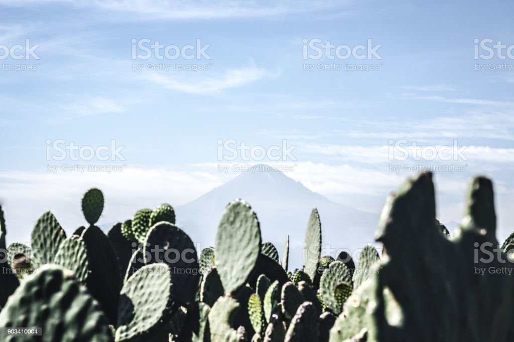 A landscape of pricky pear cactus with the volcano Popocatepetl stock photo