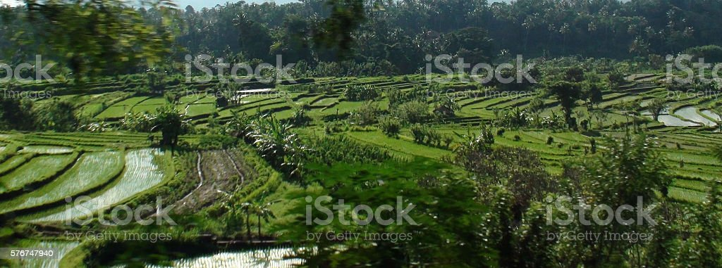 Landscape Of Rice Terrace In Bali Indonesia Asia stock photo