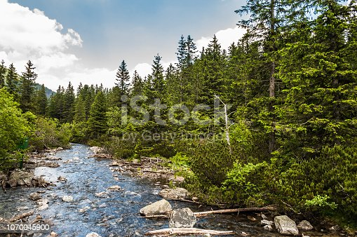 Landscape of river in mountains among trees. Rybi Potok, Dolina Rybiego Potoku at Morskie Oko, Tatra Mountains