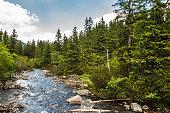 Landscape of river in mountains among trees. Rybi Potok, Dolina Rybiego Potoku at Morskie Oko, Tatra Mountains