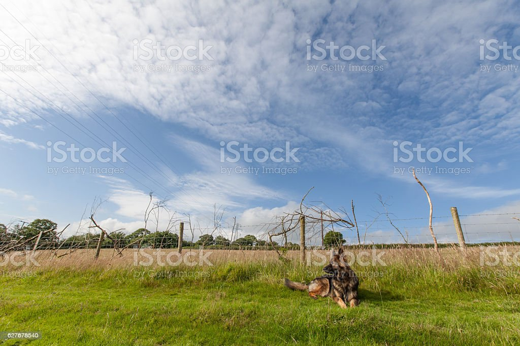 Landscape of rural farmland with a dog stock photo