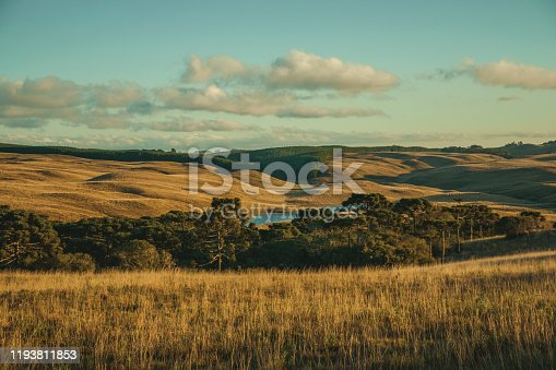 Landscape of rural lowlands called Pampas with groves and hills covered by dry bushes at sunset near Cambara do Sul. A small country town in southern Brazil with amazing natural tourist attractions.