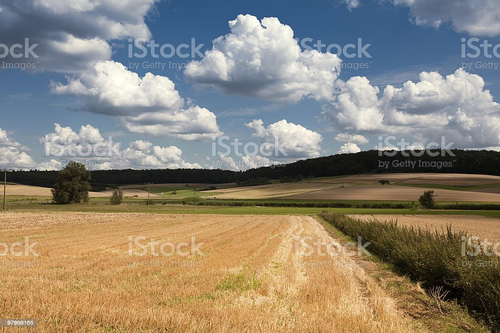 landscape of rural wheat field green grass and tree royalty-free stock photo