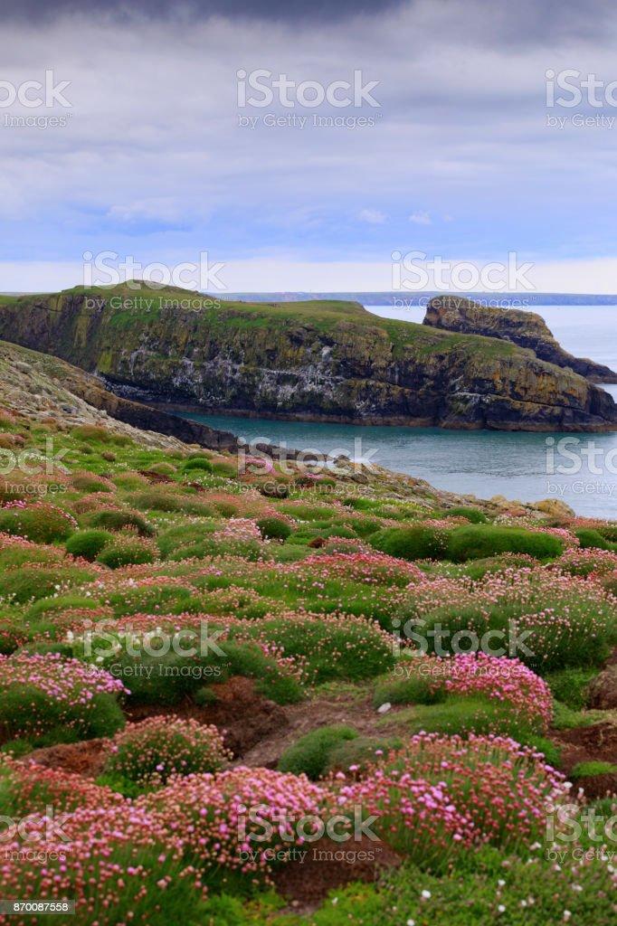 landscape of Skomer Island along the Welsh coast stock photo