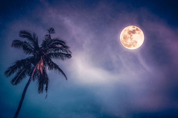 Landscape of sky and full moon with many stars behind coconut palm tree. stock photo