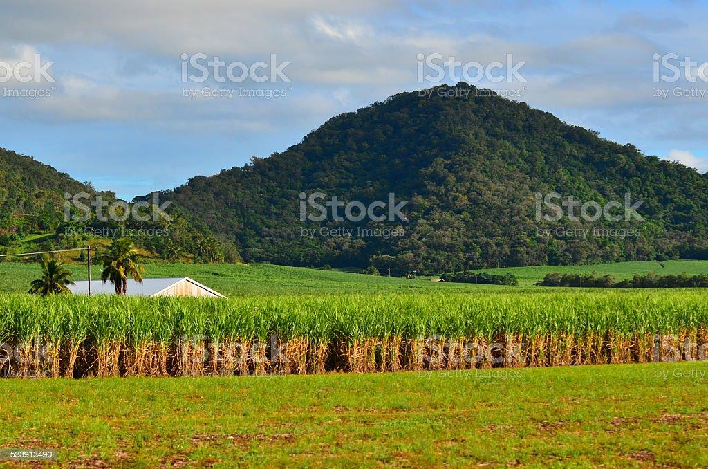 Landscape of sugar farm stock photo