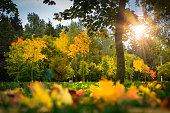 Landscape of the autumn park. Multicolored yellow and red leaves on grass, trees and sunlight. Fall. Autumn background of colorful nature. Scenic view on autumn park