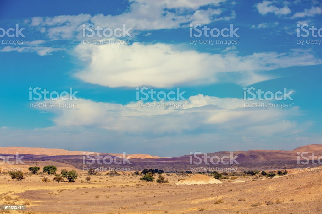 Landscape of the desert, dry riverbed. Trees grow along the dry...