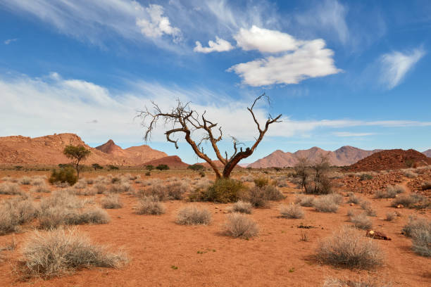 Landscape of the desert of Namibia stock photo