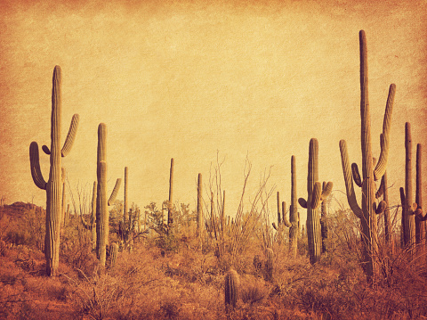 Landscape of the desert with Saguaro cacti. Photo in retro style. Added paper texture. Toned image