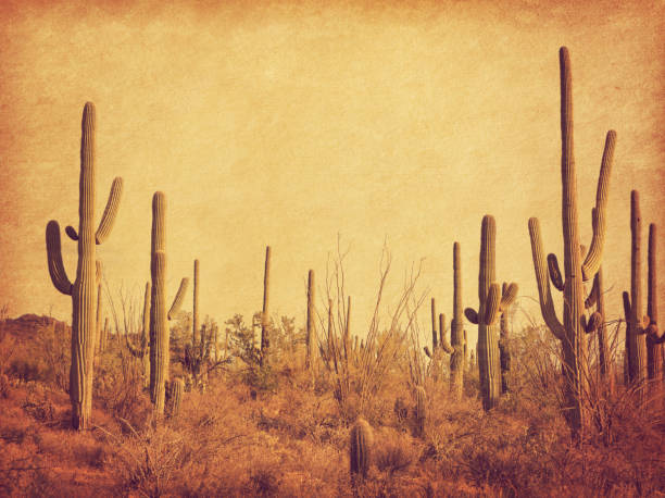 landscape of the desert with saguaro cacti. photo in retro style. added paper texture. toned image - west direction stock pictures, royalty-free photos & images