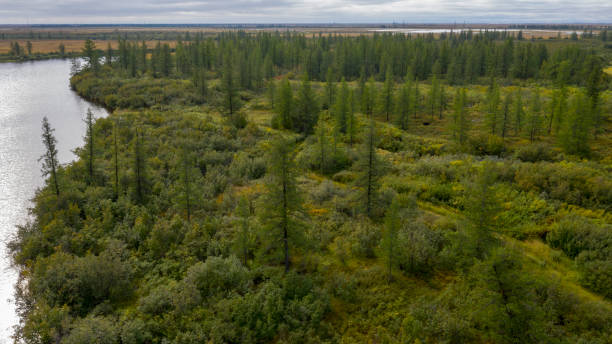 Landscape of the forest-tundra and the sandy river bank, bird's eye view.Arctic Circle, tunda. Beautiful landscape of  tundra from a helicopter. Landscape of the forest-tundra and the sandy river bank, bird's eye view.Arctic Circle, tunda. Beautiful landscape of  tundra from a helicopter. taiga stock pictures, royalty-free photos & images
