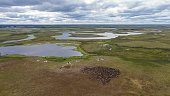 Landscape of the forest-tundra and the sandy river bank, photo from quadrocopter, bird's eye view. Arctic Circle,  Yamal,   reindeers in Tundra, pasture of Nenets, tunda