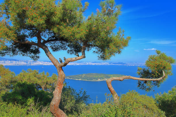 Landscape of the island Sedef Adasi with crows sitting on a pine tree in the foreground.