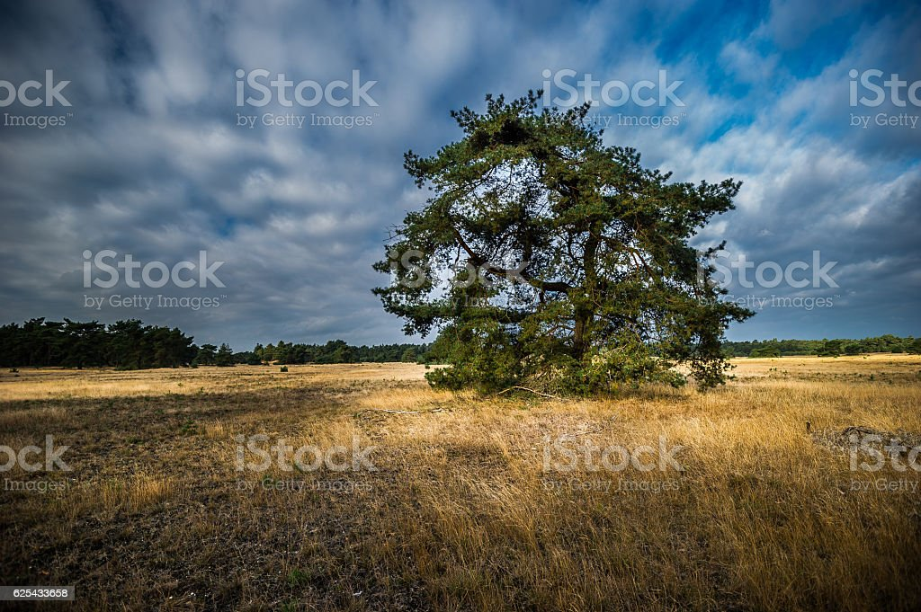 Landschaft des Nationalparks De Hoge Veluwe stock photo