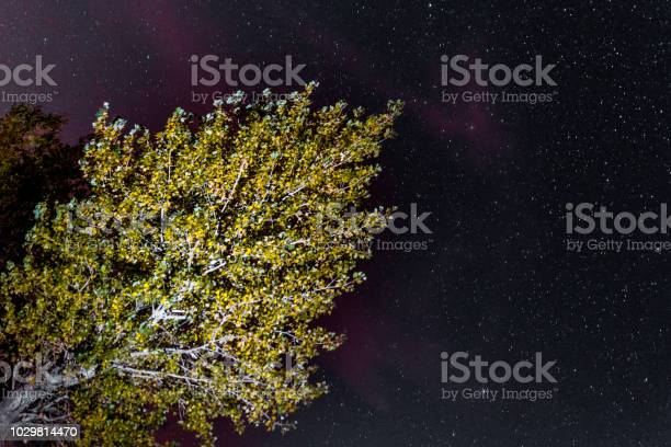 Photo of landscape of the night sky silhouettes of trees