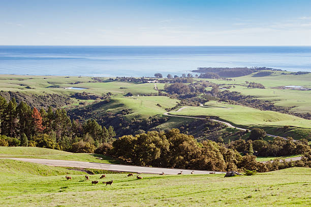 landscape of the rolling hills near san simeon, ca - central coast california stock photos and pictures