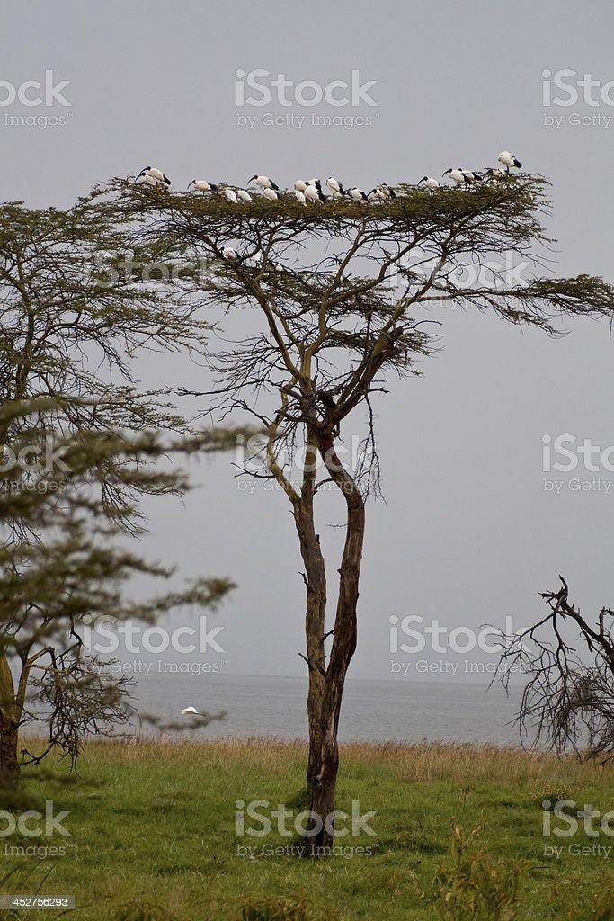 landscape of the savannah in Kenya royalty-free stock photo