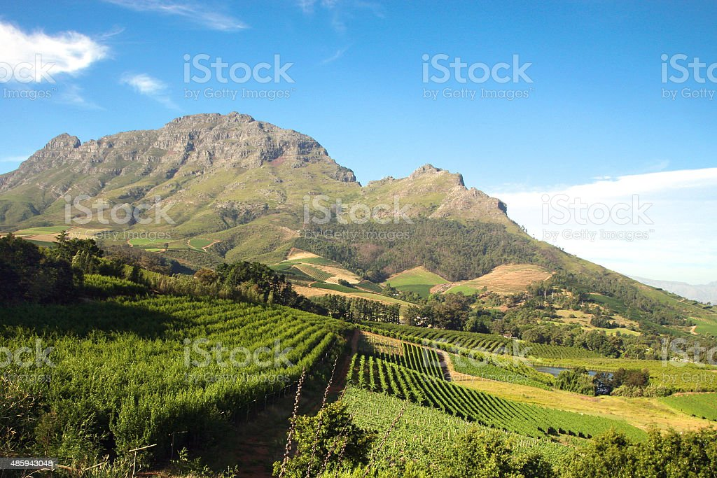 Landscape of the wineries in South Africa Panorama of a vineyard in the south of Franschhoek close to Cape Town. South Africa 2015 Stock Photo