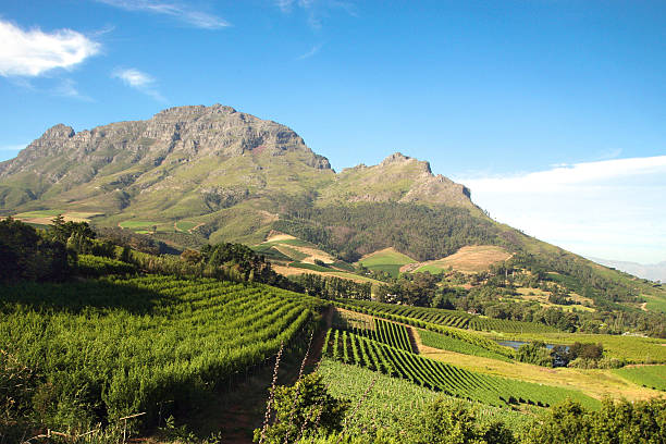Landscape of the wineries in South Africa Panorama of a vineyard in the south of Franschhoek close to Cape Town. South Africa western cape province stock pictures, royalty-free photos & images