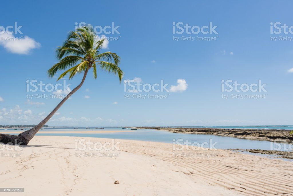 Landscape of tropical beach coconut palm trees turquoise sea blue sky white sand stock photo
