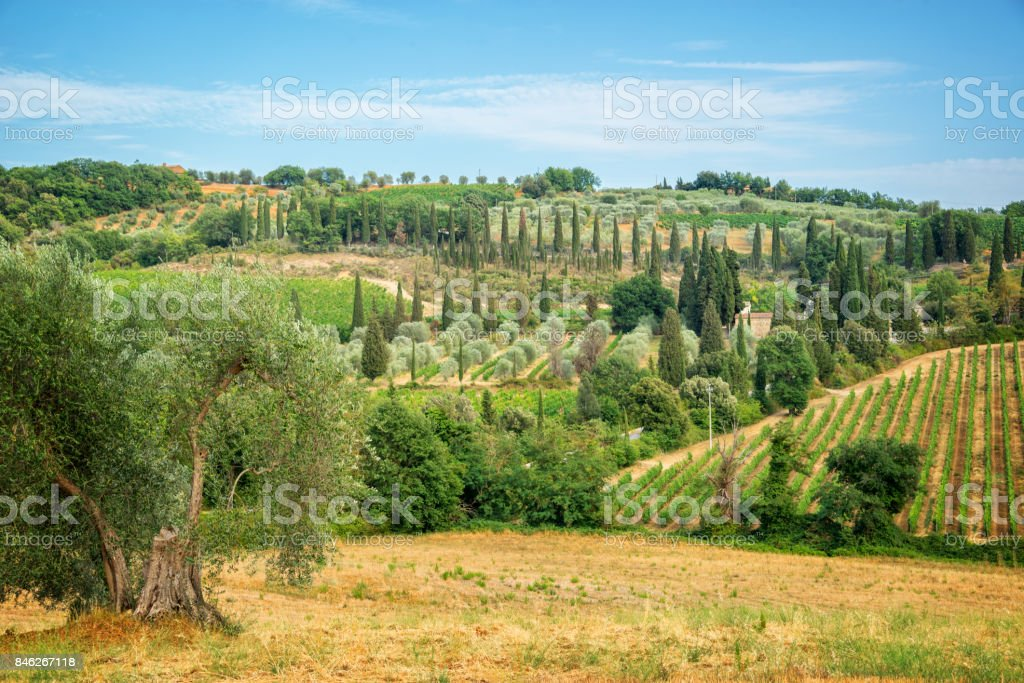 Landscape of vineyard and cypress trees near Montalcino, Tuscany, Italy stock photo