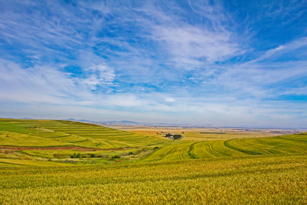 Landscape of wheat fields, sky and cloud stock photo