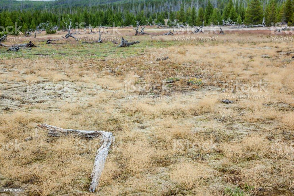 Paisaje Del Parque Nacional De Yellowstone Estados Unidos Foto De