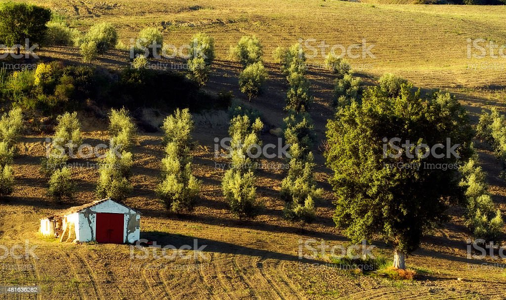 Landscape, olive oil groves, Sierra de las Cumbres, Andalusia, Spain stock photo