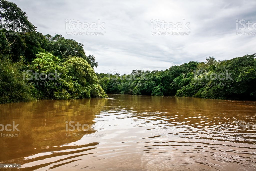 Landscape on a river in the jungle state Argentina royalty-free stock photo
